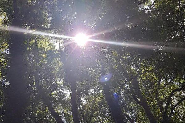 Le soleil dans la forêt reposante