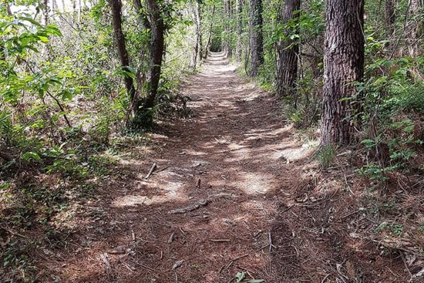 La forêt proche de Contis